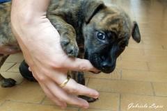 Sofia (gabi.sl23) Tags: dog pet co puppy finger samsung animais filhote dedo mordendo s760 photoscape