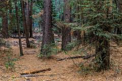 Yosemite Trip - Jan 2015 - 193 (www.bazpics.com) Tags: california park ca usa nature america landscape scenery unitedstates hiking national yosemite yosemitevalley barryoneilphotography