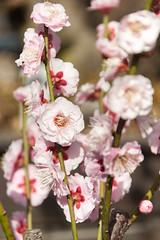 DS7_9861.jpg (d3_plus) Tags: street sky plant flower nature japan walking tokyo outdoor fine daily bloom    tamron   dailyphoto  kawasaki thesedays  fineday   tamron28300mm tamronaf28300mmf3563  a061   d700  tamronaf28300mmf3563xrdildasphericalif  nikond700 tamronaf28300mmf3563xrdildasphericalifmacro tamronaf28300mmf3563xrdild a061n