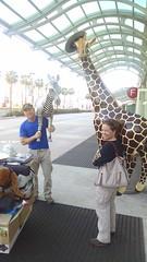 Here's something you don't see every day! (EllenJo) Tags: california ca sandiego dean zebra giraffe february ashton harbordrive 2015 sandiegoconventioncenter harbordr ellenjo outofafricawildlifepark ellenjoroberts attheendoftheshow sandiegotravelandadventureshow