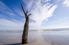 Stripped tree at Hunting Island State Park (m01229) Tags: 2014 d7000 december2014