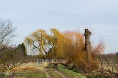Upload (Fakre) Tags: nature landscape salix babylonica 500px ifttt