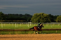 Morning Gallop (susanmbarlow) Tags: morning horse racetrack photograph delaware racehorse thoroughbred equine gallop equus delawarepark equidae equusferuscaballus delparkracing
