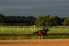 Morning Gallop (susanmbarlow) Tags: morning horse racetrack photograph delaware racehorse thoroughbred equine gallop equus delawarepark equidae equusferuscaballus delparkracing