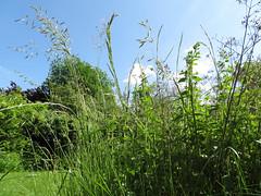 ckuchem-1241 (christine_kuchem) Tags: himmel gras garten perspektive froschperspektive grashalm