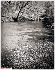 West Don river shadows (DelioTO) Tags: 4x5 90mm aph09 autaut blackwhite botanical canada historical landscape lensed march natparks ontario panoramic panx50 rural schneider spring toned trails woods