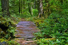 To cross, or not to cross... (Starkrusher) Tags: hohrainforest olympicnationalpark inlandrainforest green healthyvegetation washington washingtonstate