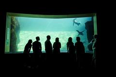 VALENCIA. L'OCEANOGRAFICO. (FRANCO600D) Tags: valencia spagna espana cittdelleartiedellascienza museo acquario parcooceanografico oceanografico parcomarino turisti turismo vasca foche canon eos600d sigma franco600d