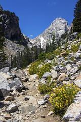 Flowers along the Trail (isaac.borrego) Tags: uploadedviaflickrqcom mountains peaks trail flowers grandteton nationalpark wyoming canonrebelt4i jacksonhole flower unitedstates america usa