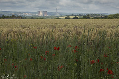 Summer in the Countryside (LindaShaws Images) Tags: uk england sky clouds landscape countryside corn cornfield glow wheat harvest poppy poppies crops wildflowers staffordshire powerstation ripening rugeley morrey