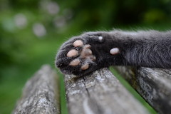 PW (rainbowcave) Tags: paw cat tomcat bench bokeh pfote bank kater katze
