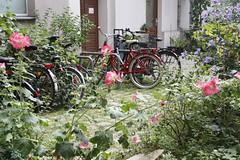 Berlin (annamartta) Tags: berlin city citybreak plants trees street