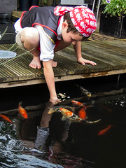 DSCF2264-2 (ronaldzijlstra2) Tags: kid son boy dog cairnterrier koi vis vish vijver pond