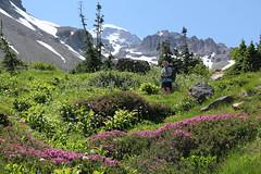 The wildflowers and...... (McCoy352) Tags: wildflowers heather color rainier pacificnorthwest glacierbasintrail washington fun hike mountains landscape friend enjoyment