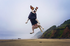 Joyful George (West Leigh) Tags: george jackrussellterrier dog puppy leap jump beach oregon oregoncoast coast beack water ocean wanderlust wander explore experience dream discover travel happy joy love spring float happydog