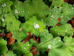 macro selection - raindrops collector - 2016-10-14 (eagle1effi) Tags: tbingen bergfriedhof nature naturemasterclass s7 samsung galaxy