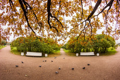 Branches & Benches -    (Valery Parshin) Tags: russia saintpetersburg stpetersburg ingermanland trees tree autumn valeryparshin 8mm fisheye samyang