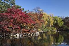 Seoul Autumn (Rolandito.) Tags: seoul south korea sdkorea autumn fall red tree trees palace park