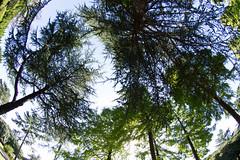 Twigs got Entangled (nak.viognier) Tags: twig entangled ryokuchipark osaka  olympusepl3 lumixgfisheye8mmf35
