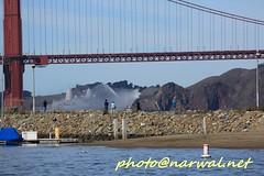 Fleet Week SF 2016 (Narwal) Tags: fire department sffd golden gate bridge  sfo sanfrancisco california ca us usa    marina district fleet week sf 2016  uss san diego lpd 22 parade ships