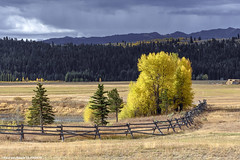 Grand Teton National Park (2), 19-09-2016 (Paul van Baarle) Tags: herfst call autumn nikon d7200 verenigdestaten unitedstates vs usa amerika america grandteton nationalpark wyoming landscape scenery tree boom