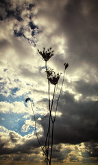 The Uprise (Anthonypresley1) Tags: clouds cloud sky skyscape still life stilllife object flower plant dark uprise anthony presley anthonypresley conceptual old retro vintage