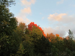 Peekaboo Tree (genesee_metcalfs) Tags: autumn fall october michigan trees maple leaves color nature sky clouds beauty