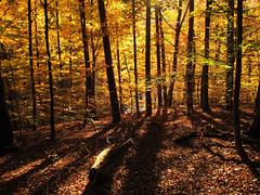 Autumn Forest (Habub3) Tags: autumn forest canon germany deutschland herbst powershot wald g12 2014 kernen habub3