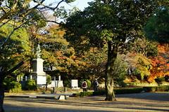 (ddsnet) Tags: travel plant japan sony autumnleaves 99  nippon   autumnal nihon  slt backpackers           singlelenstranslucent 99v