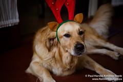 Christmas Day at Gazeka Cottage, Southbroom