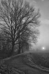 verso un nuovo giorno (mat56.) Tags: morning trees misty fog alberi sunrise landscapes alba walk aurora antonio nebbia paesaggi lombardia lodi pianura mattino percorso lodigiano padana mat56 romei livraga