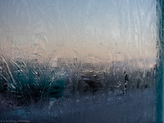 (katrin glaesmann) Tags: christmas iceland december reykjavík windowfrost iceflowers eisblume fernfrost