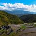 rice fields panorama