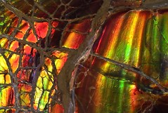 Ammolite closeup section (Wood's Stoneworks and Photo Factory) Tags: ammolite