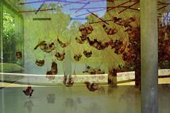 INHOTIM - 2014 -  (68) (ALEXANDRE SAMPAIO) Tags: cidade minasgerais arquitetura brasil cores plantas arte natureza paz vida contraste urbano beleza prdio fotografia formas cor fantstico cultura desenho espao histria mgico criao edifcio energia magia iluminao composio estrutura tradio imaginao patrimnio esttica delicadeza sensibilidade invisvel possibilidades inhotim visvel transcendncia alexandresampaio
