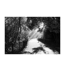 Hyde Park (London) (Jordan | Street photographer) Tags: park street uk inglaterra parque light england blackandwhite bw woman tree london luz arbol lumix calle mujer unitedkingdom streetphotography