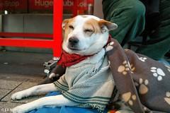 sweet dog... (JTBednarz) Tags: dog samsung hannover hund jarek nx nx2000 jbednarz