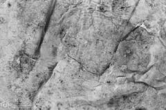 Cooked potato (mtux) Tags: abstract closeup pentax si potato f11 k3 kiron raynoxdcr150 kiron28mmf2 justpentax