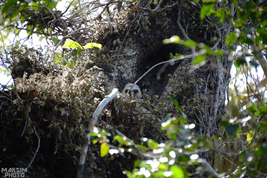 eagle nest cougar women The pennsylvania game commission announced wednesday its live feed of a bald eagle nest pennsylvania's live bald eagle police search for chester county woman.