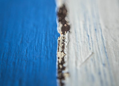(Emwilson_photography) Tags: camera blue white macro love nature photography photo nikon rust paint blueandwhite macrophotography d3100 nikond310