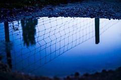 Reflection (anna2610rommel) Tags: reflection water nikon wasser spiegelung reflektion pftze d5100 nikond5100