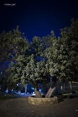 carob (mehmetgul72) Tags: street old longexposure night canon long nightshot streetphotography catedral cyprus 16mm famagusta northcyprus kktc magusa 5dmark