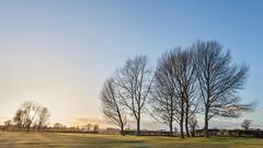Askham Golf (matrobinsonphoto) Tags: wood york trees sunset sky sunlight grass forest woodland golf golden warm yorkshire north course clear hour bogs bog askham