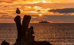 HMCS Winnipeg and Seagull @ Sunrise (Paul Rioux) Tags: morning sun beach silhouette sunrise dawn log ship bc britishcolumbia seagull military navy victoria vancouverisland driftwood frigate naval warship daybreak sunstar royalroads juandefucastrait prio canadianforces salishsea royalcanadiannavy hmcswinnipeg