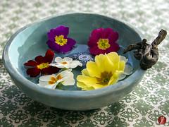 Tischlein deck Dich! (bornschein) Tags: flower water stone spring pattern turquoise