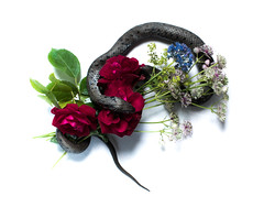 Summer bouquet (Alison De Mars) Tags: life flowers roses summer stilllife rose still snake bouquet grasssnake f64g77r1win