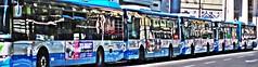 Processionaria... (Riccardo Orti) Tags: pentaxk20d pentax50mmf18 autobus riflesso contrasto corsoitalia trieste