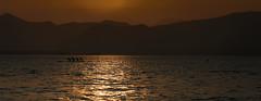 movement (korinthography ~sometimes off~) Tags: sunset water lumix boat movement sundown outdoor panasonic bewegung gardasee tz101