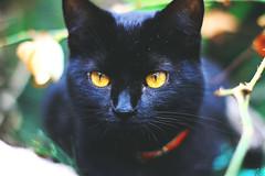 cuca. (iampaulablue) Tags: pets animals cat canon kitty gato animales amateur mascotas cuca
