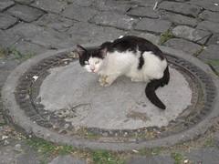 Cats_in_Trabzon (6) (Sasha India) Tags: cat turkey chat trkiye tur trkorszg journey gato  macska turquia kedi trabzon